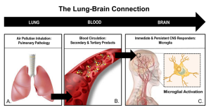 The Lung-Brain Connection